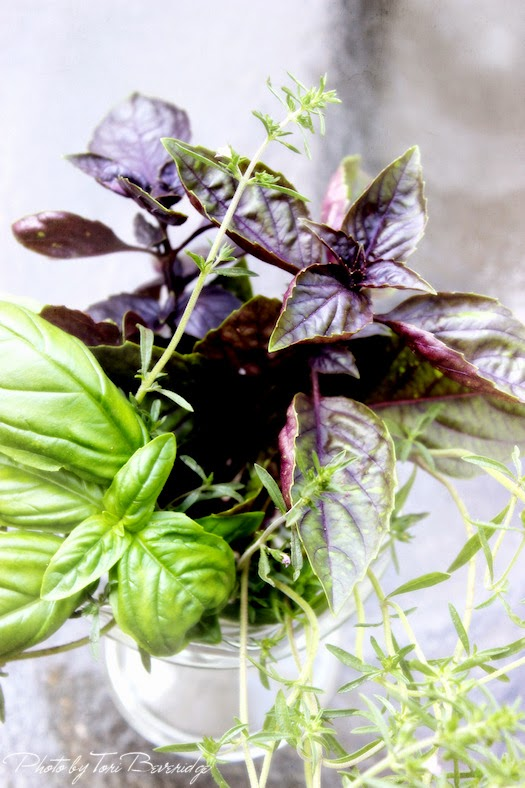 Basil and Summer Savory Bouquet 2 Photo by Tori Beveridge AHWT