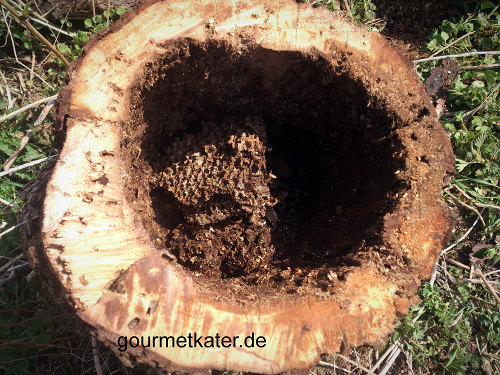 Bienen-Waben
