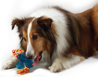 Petstages-Orka-Jack-with-Rope-Dog-Toy