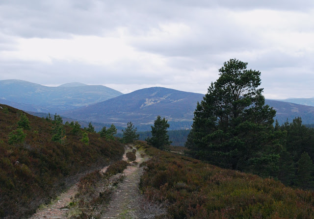 Glen Tanar Estate walk