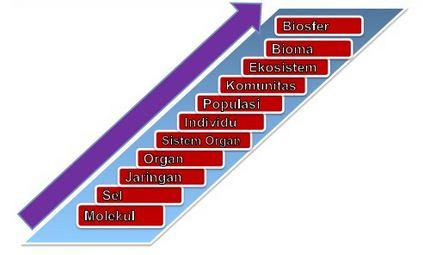 Urutan atau Tingkatan Organisasi Kehidupan