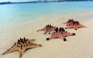 Pulau Pasir Tempat Wisata di Belitung