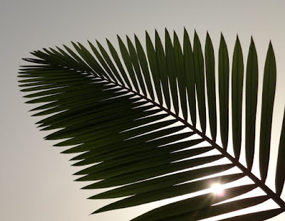 Palm Fronds Day