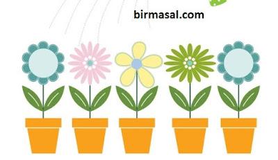 Çiçek Kokusu