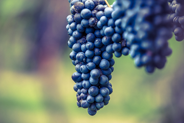 the different types of lambrusco