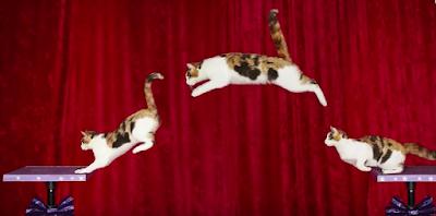rekor-kirmis-kediler