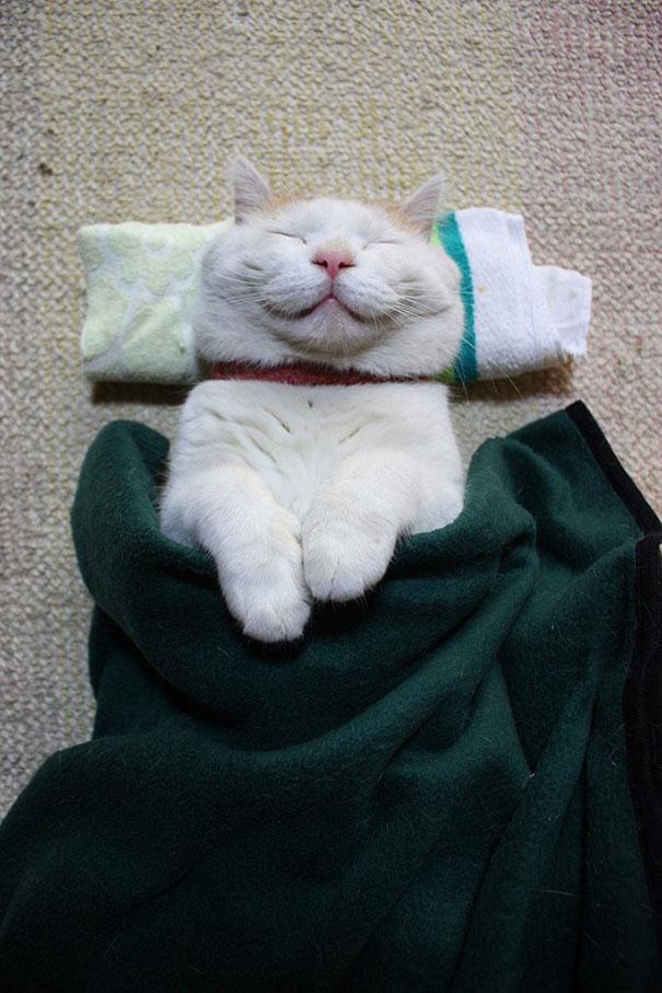 Shironeko, The Happiest And Sleepiest Cat Ever-1