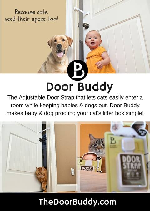 The Door Buddy lets cats and keeps dogs out