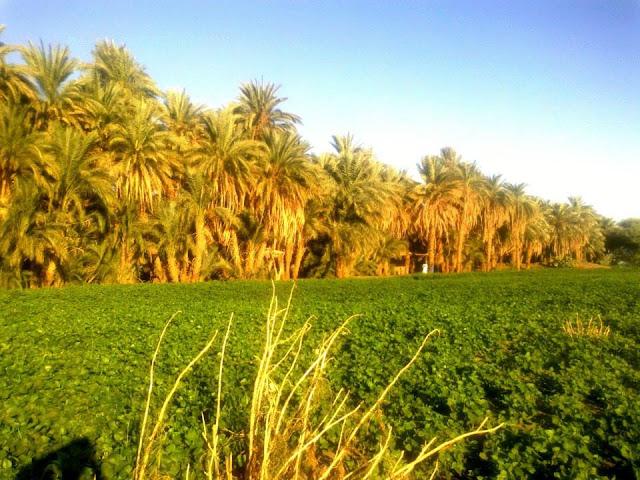 مزرعه في شمال السودان