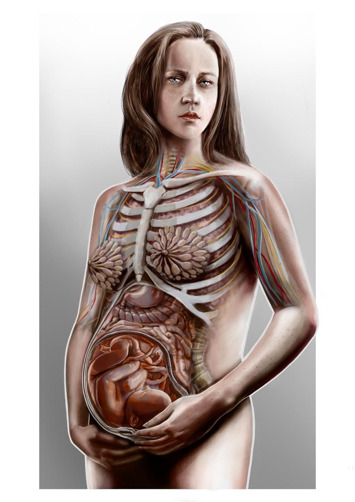 Anatomía del embarazo - Amelia Sales Mira