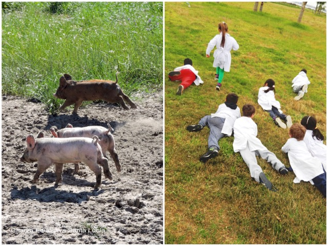 Lechones corriendo / Niños reptando y corriendo - Chacra Educativa Santa Lucía