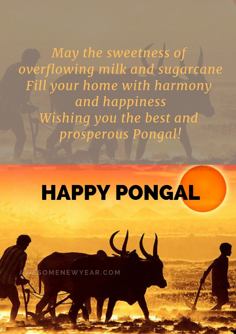 Pongal Wishes with Quotes to share with your friends and family