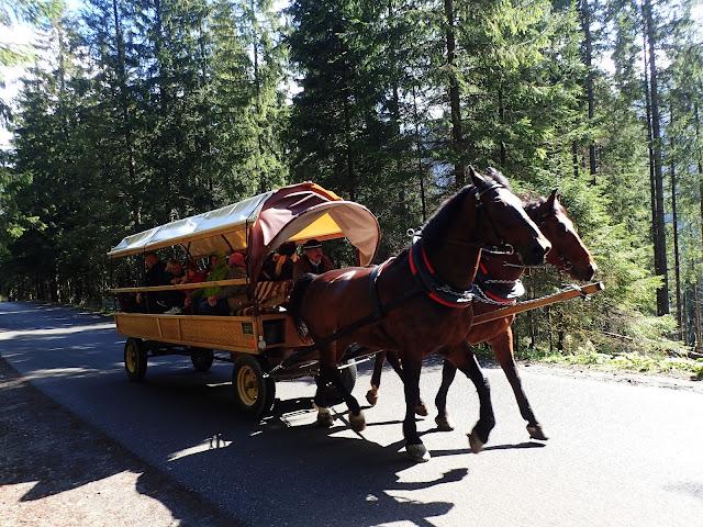 Konie na asfaltówce (maj 2017)