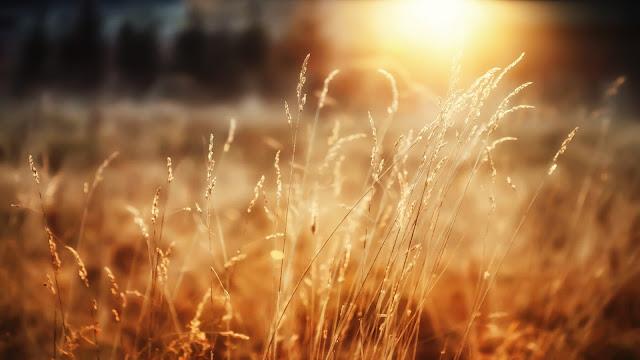 morning_sunshine-HD.jpg