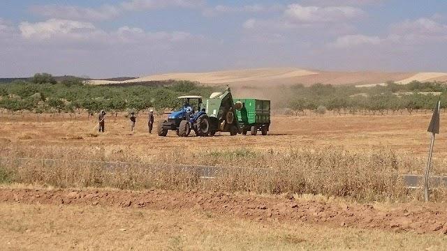 Kuraklık Bozovalı Çiftçiyi bitirdi