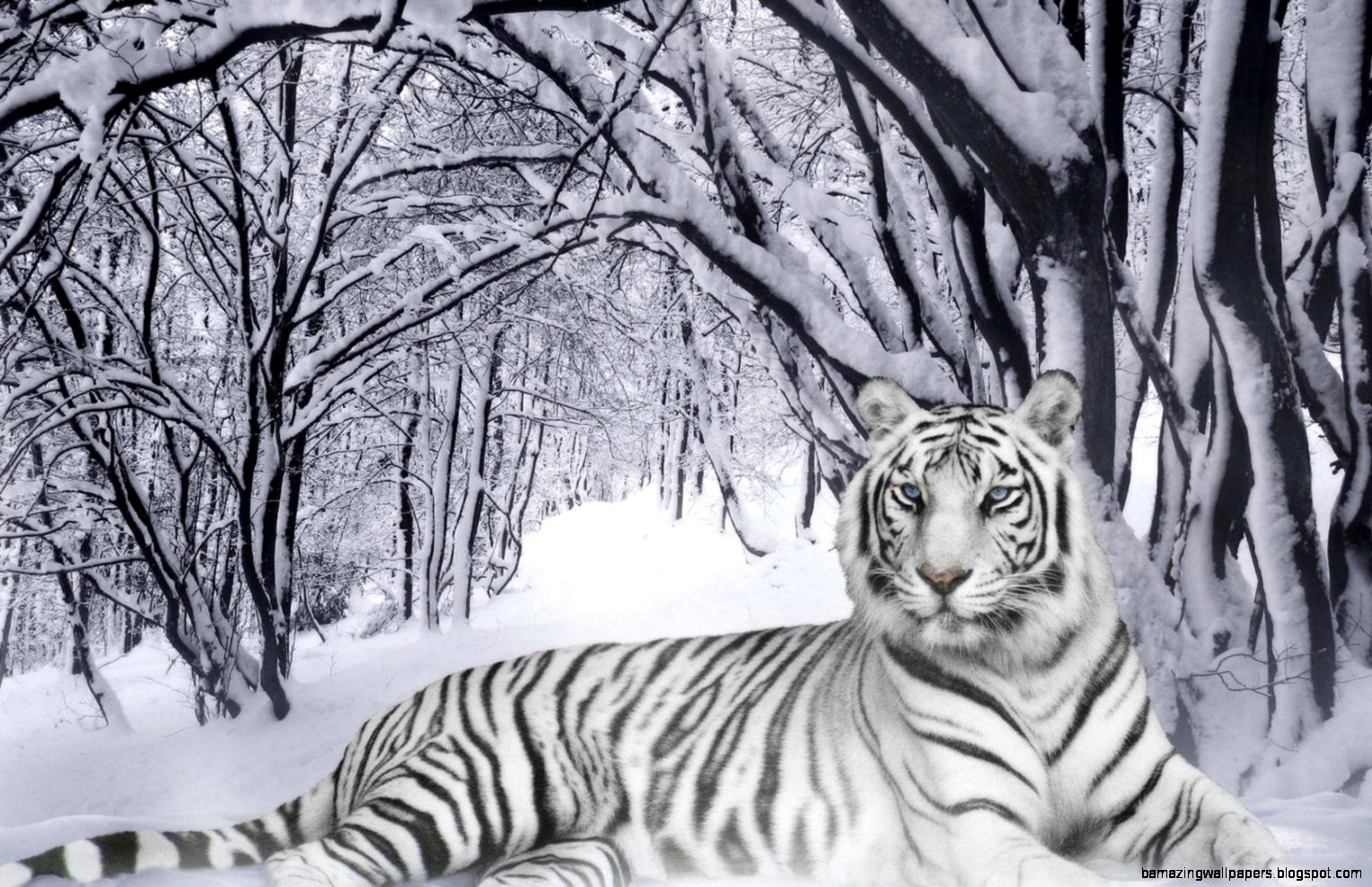 Latest Black And White Tiger Iphone Wallpaper - cute and