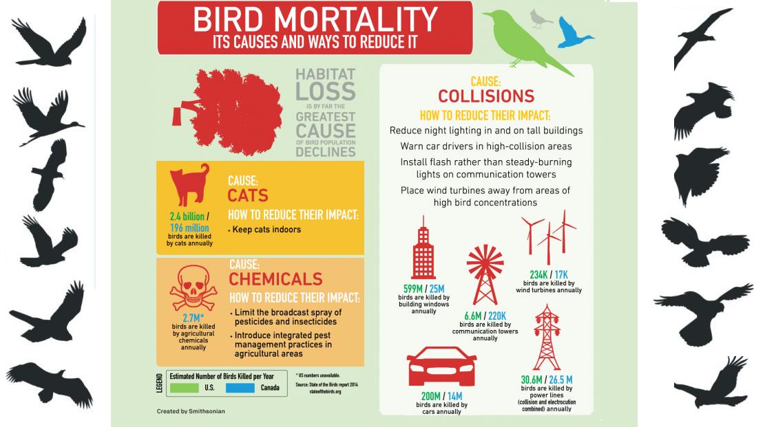 The GREEN MARKET ORACLE: Infographic - Anthropogenic Bird ...