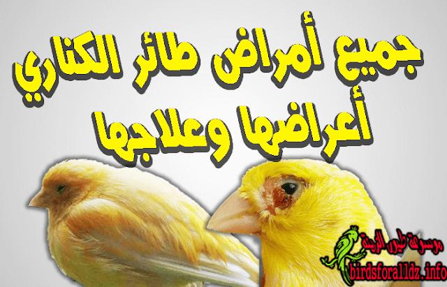 امراض طائر الكناري و علاجها