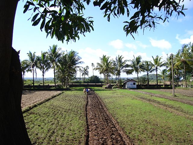 Farming in Saligao, Goa
