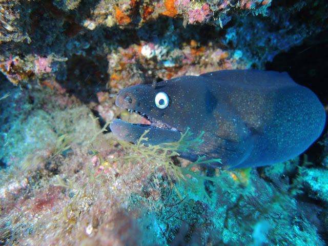 Photo of a moray eel during scuba diving Gran Canaria