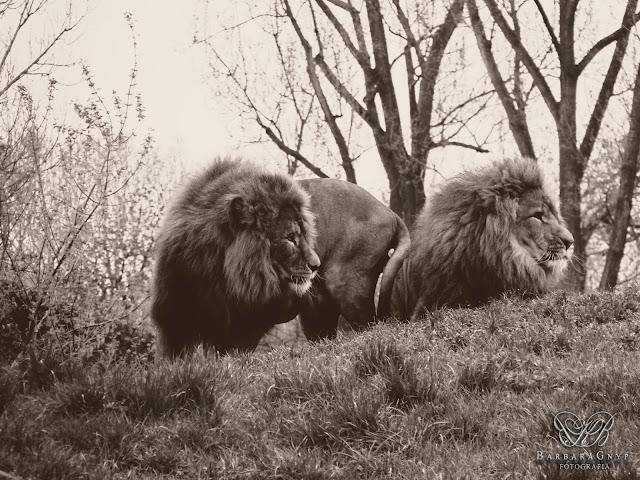 Spacer po warszawskim zoo :)