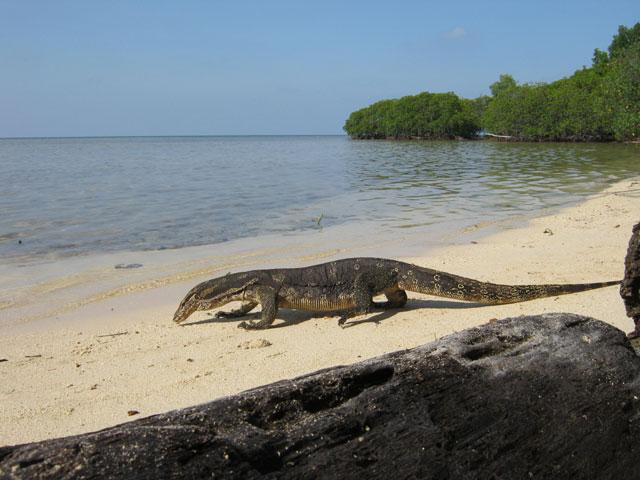 Pulau Biawak