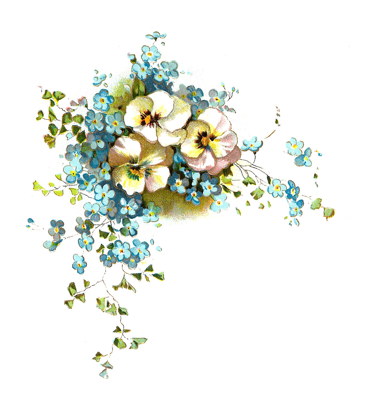 clip art forget me not flower - photo #44