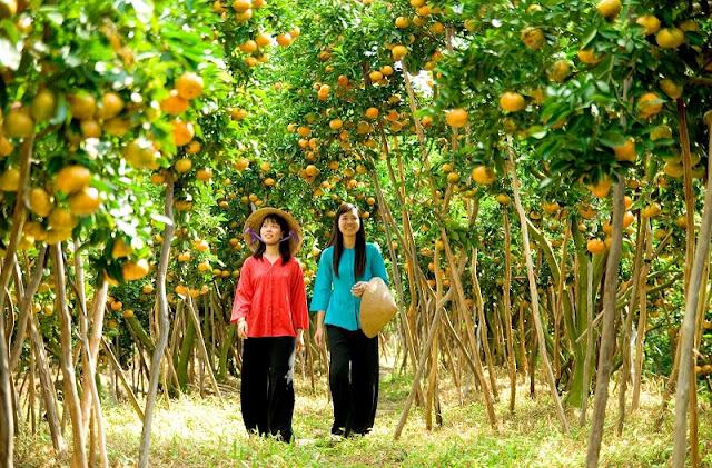 Garden tourism in Long Khanh-DongNai 1