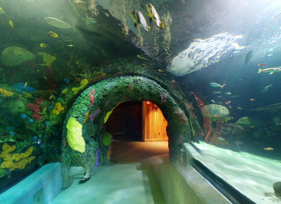 Virginia Beach Aquarium Wedding Venues