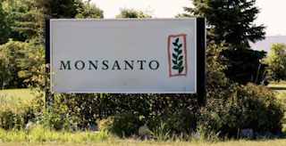 Large U.S. farm study finds no cancer link to Monsanto weedkiller