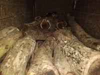 Diduga Curi kayu, Para Pemuda Ini Diamankan Polres Lampung Utara
