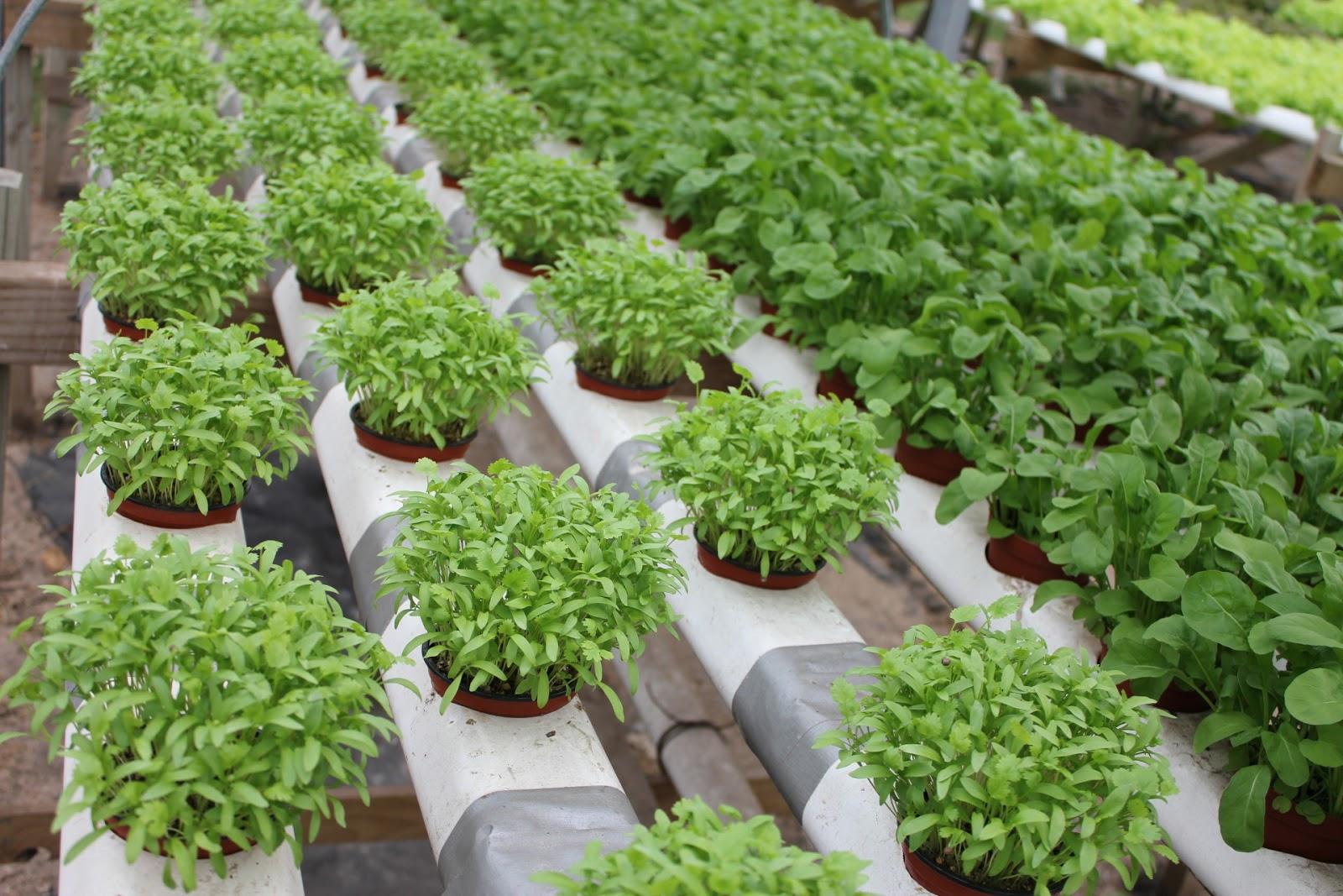 Studpac hydroponics aquaponics farms for Hydroponics aquaponics