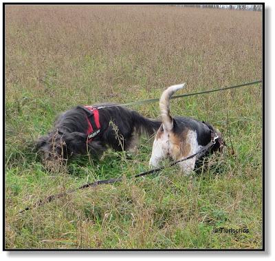 Hunde haben die besseren Nasen, Nasenarbeit beim Hund