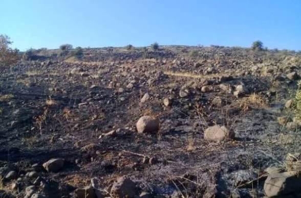 إخماد حريق اندلع في أراضٍ بين بلدتي قنوات ومفعلة بالسويداء(صور)