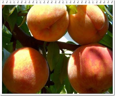 Manfaat buah persik bagi kesehatan tubuh