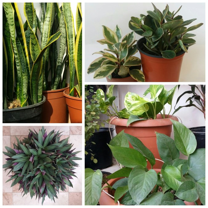 مدونة يل ا نـزرع أسماء نباتات الزينة المنزلية بالصور