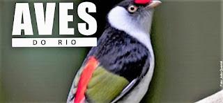 Teresópolis sedia encontro sobre observação de aves