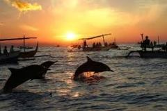 tour lumba-lumba - ikan lumba-lumba berlompatan
