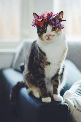 Blossom Cat Pretty