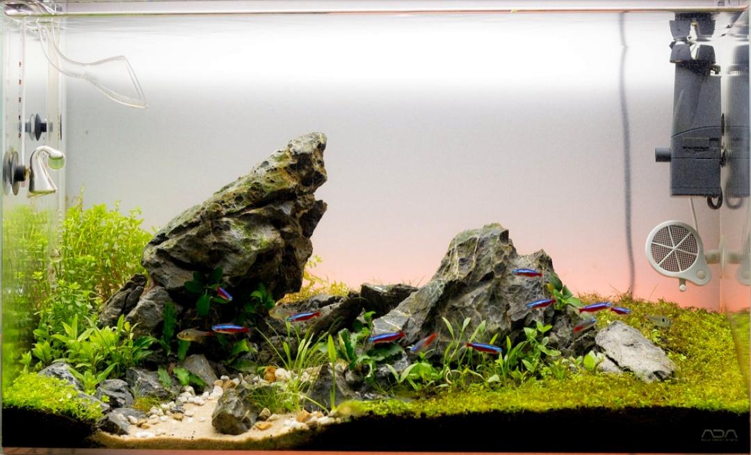 10 Model Tema Aquascape Terbaik Disertai Contoh Gambarnya Hobinatang