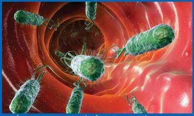 Phương pháp cơ bản xác định vi khuẩn gây bệnh trong bệnh phẩm