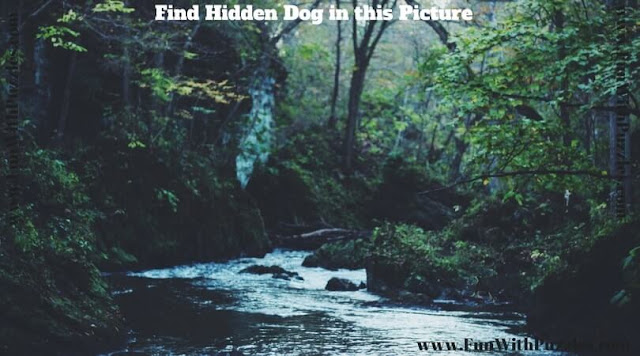 Can you find hidden animal in this picture puzzle