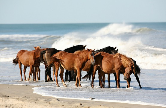 Wild Horses At Rainbow Beach