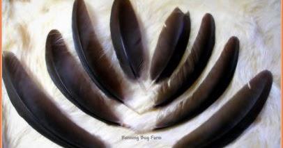 Carik Carik Bulu Ayam Lama Lama Bercantum Juga
