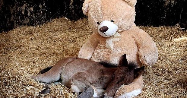 Angle Bear Evident Effect Alert Annette Funicello Teddy Bear Celeste