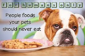 Human Foods Your Dog Should Never Eat