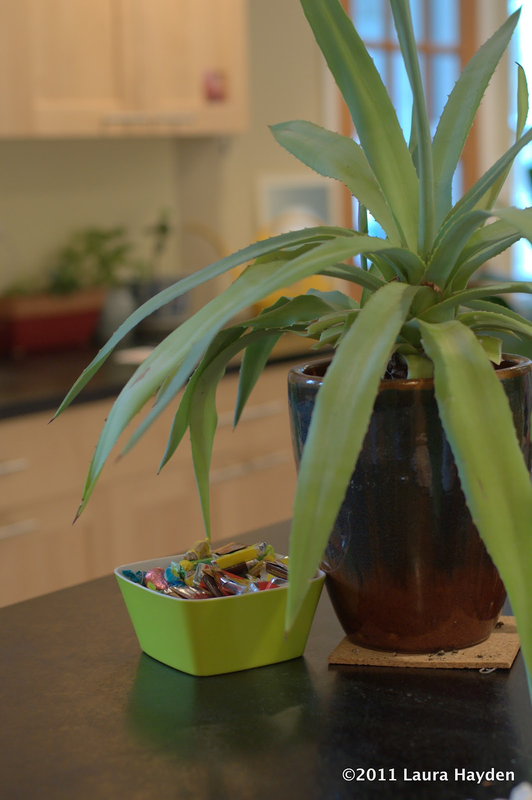 Durable Plants For The Garden: Durable Gardening: Easy Indoor Plants: Agave