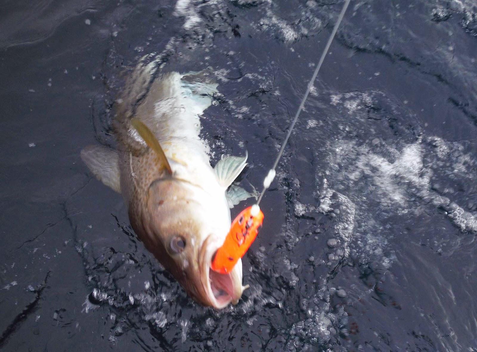 Рыбалка на треску в апреле