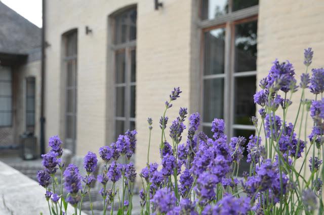 "Garnier estate ""Vaucelleshof"" garden design includes boxwood, hydrangeas, roses, lavender and wisteria image via Garnier (be) as seen on linenandlavender.net"