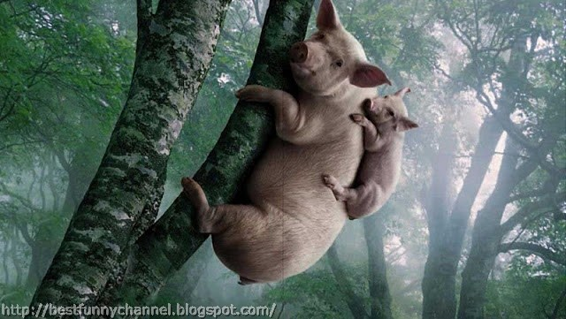 Two funny Pigs in the tree.
